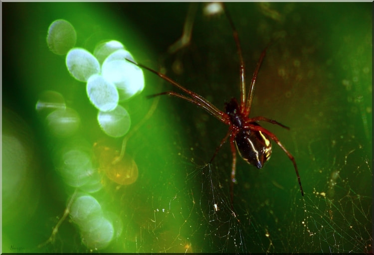 Photograph Spider and the drops by Nurşen Biçer on 500px