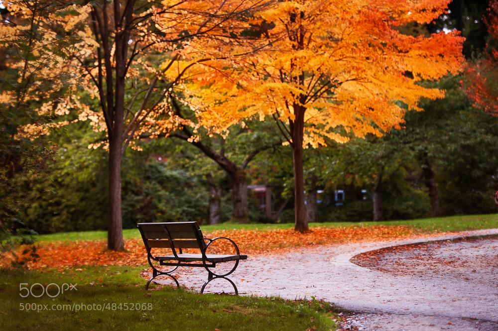 Photograph autumn.. by Kristina Napolskih on 500px