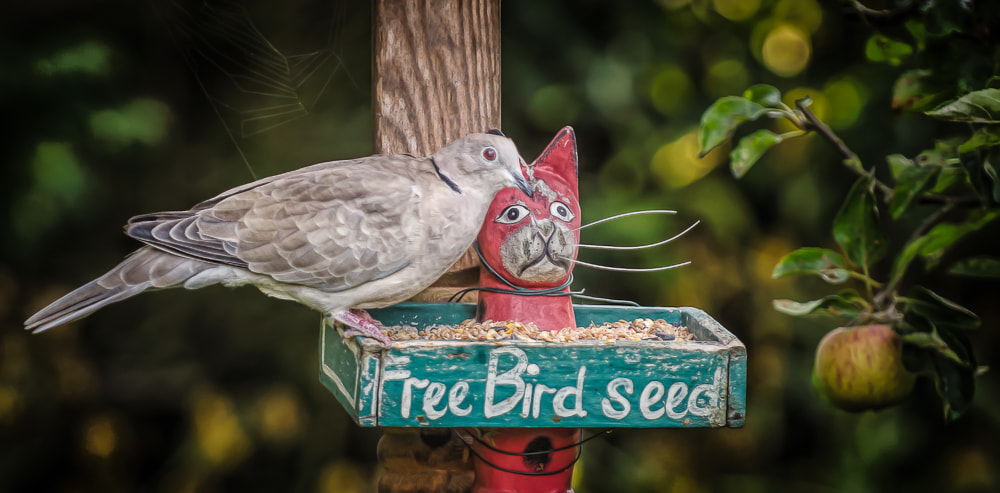 Photograph Proof: FREE Lunch Does Exist by Glyn Dewis on 500px