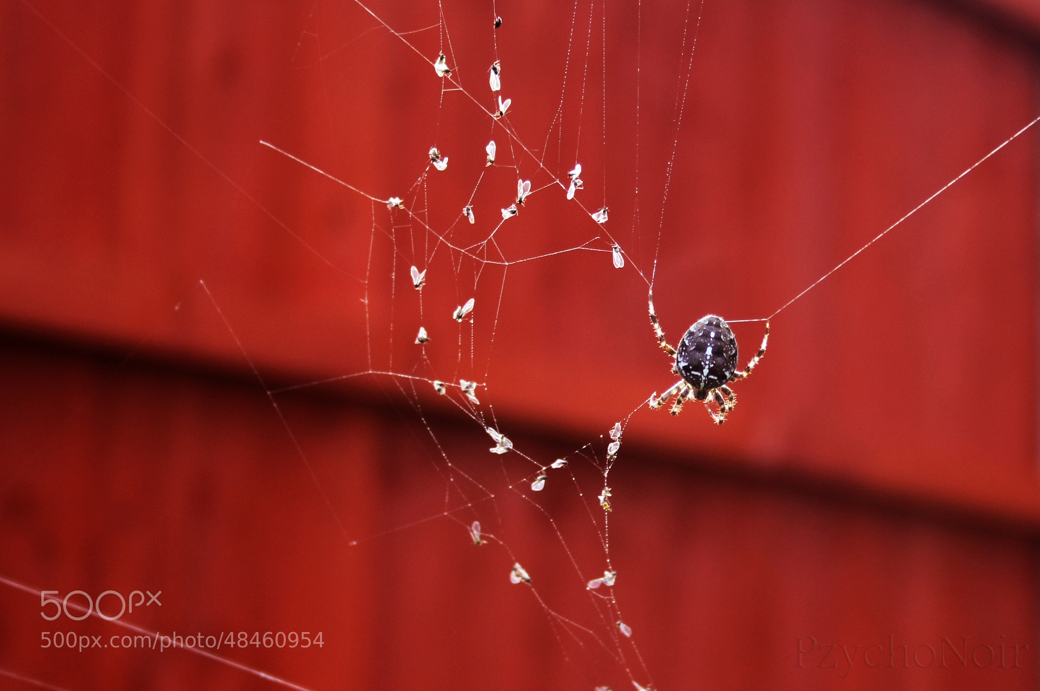Photograph Spider at Work by Laurais Arts on 500px