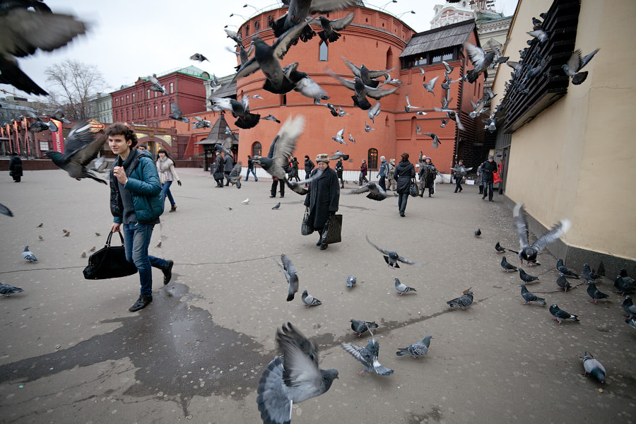 Photograph Pigeons surround by George Malets on 500px