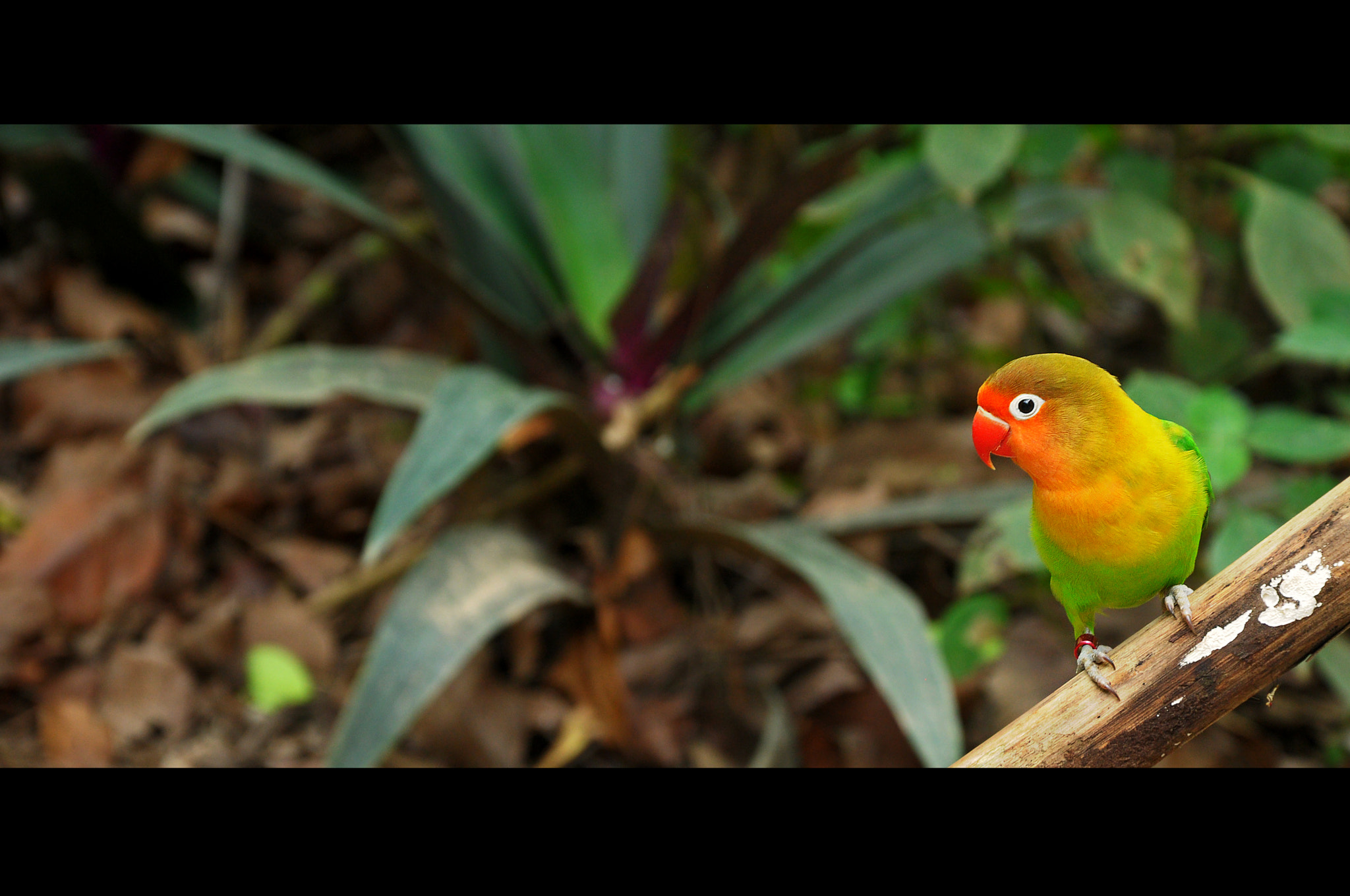 Photograph bird by Asyraaf Azahari on 500px