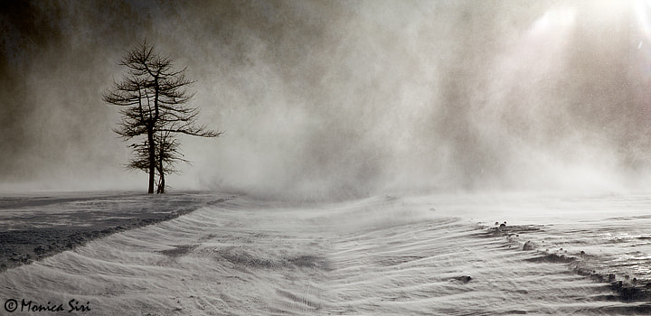 Photograph Blizzard by Monica Siri on 500px