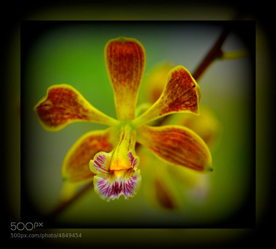 botanic Gardens - SP Brazil