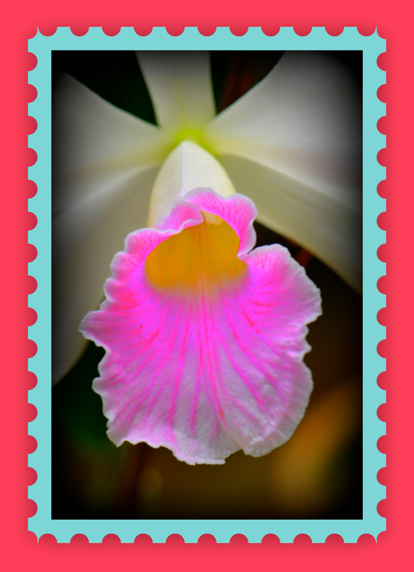 Photograph orchids by Jose Dalvo Maia Junior on 500px