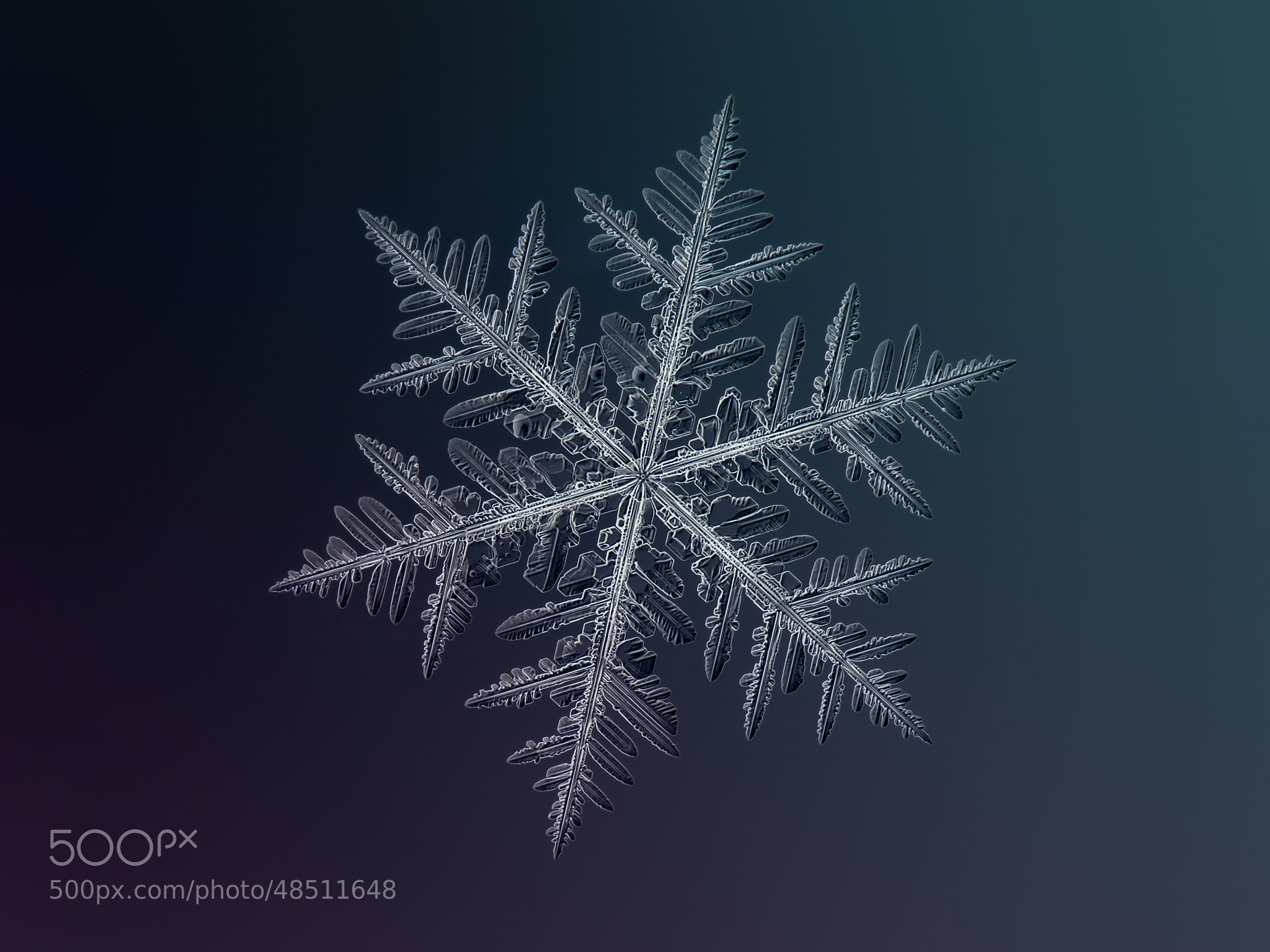 Winter Wonderland  - Cover
