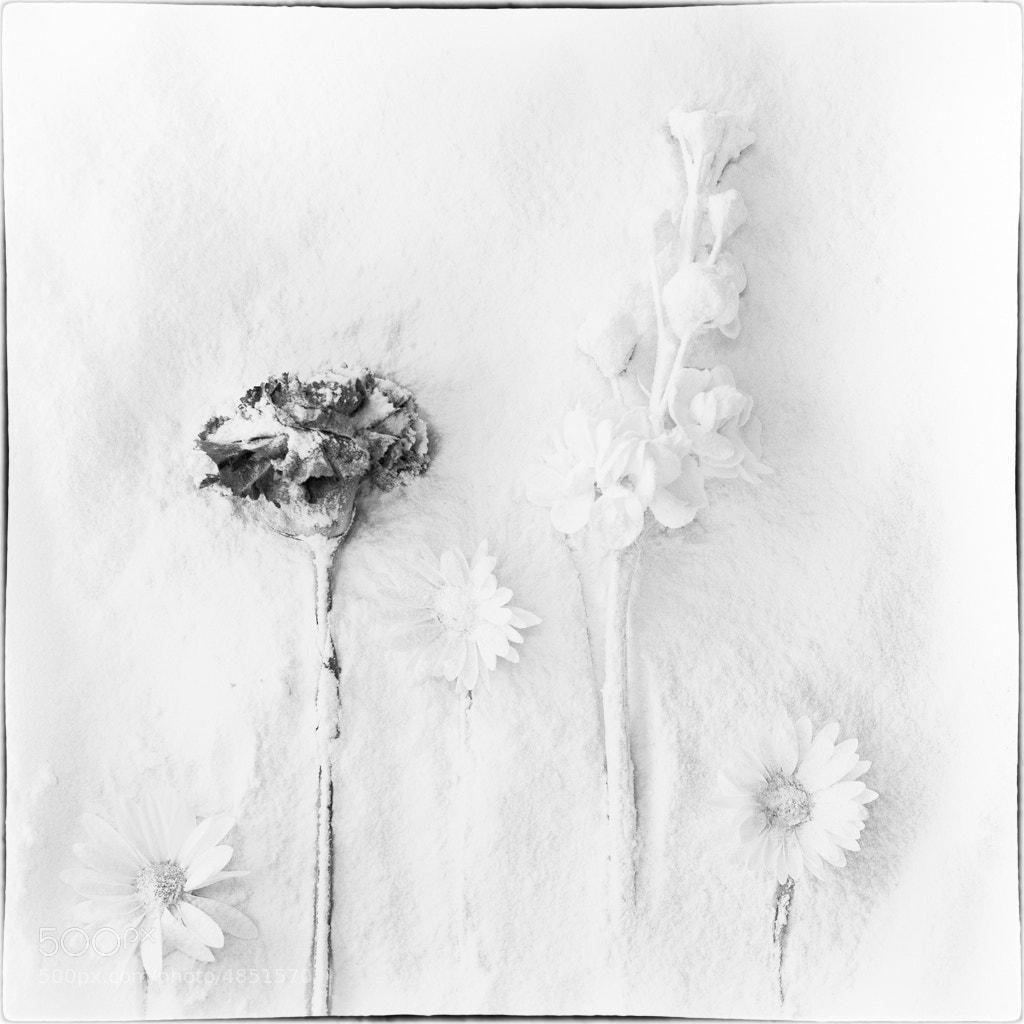 Photograph My Winter Garden by Britta Hershman on 500px