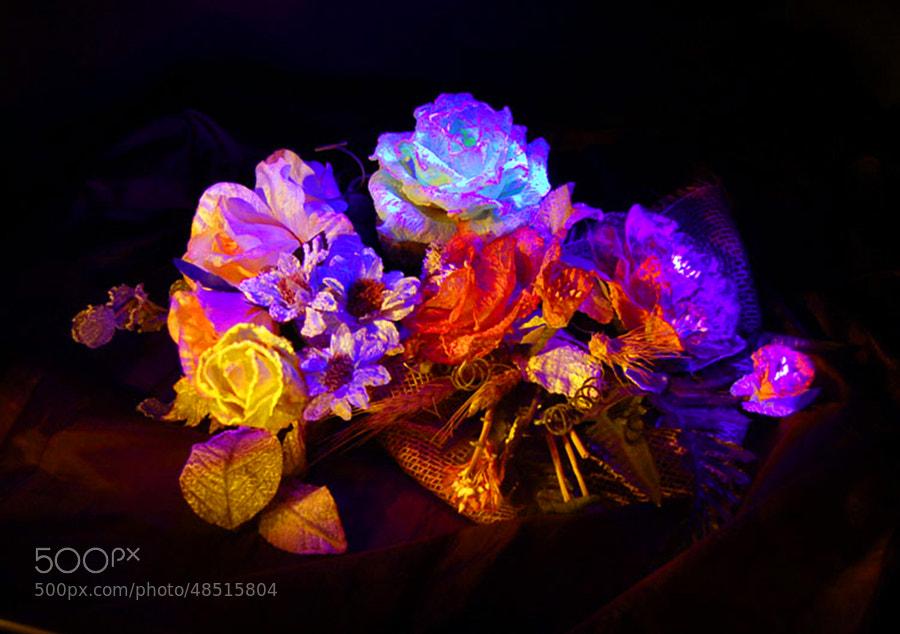 Lightpainted flowers