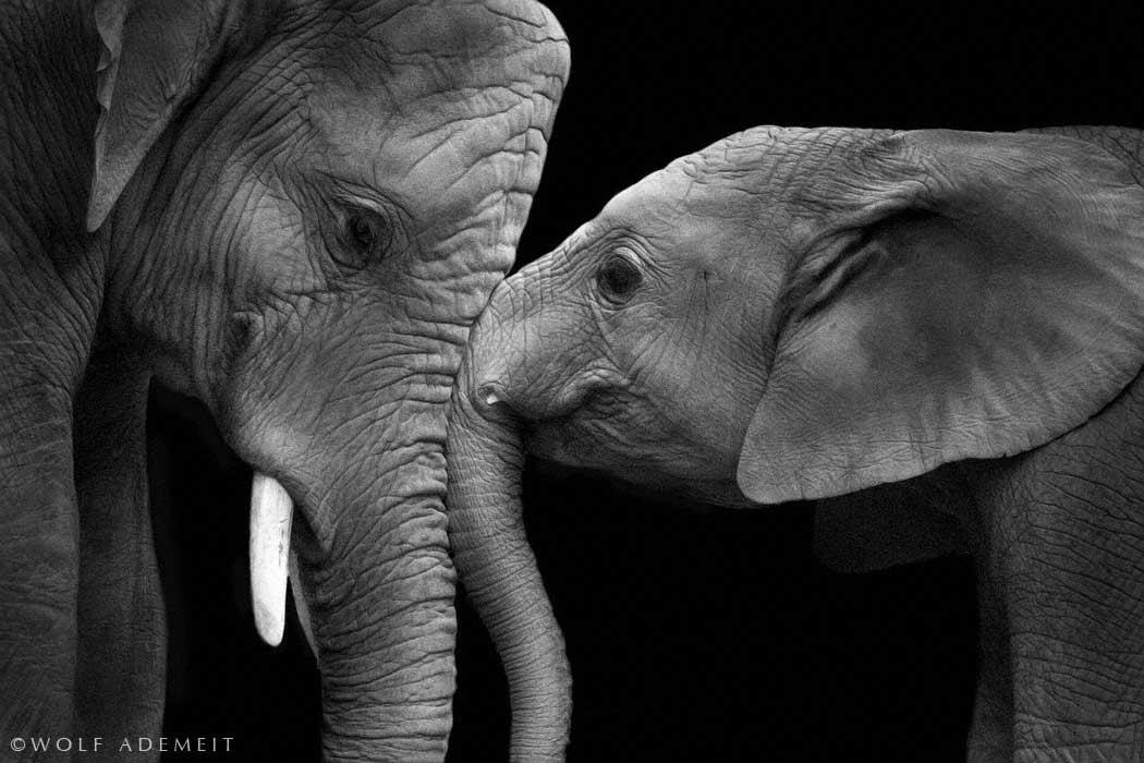 Photograph real love by Wolf Ademeit on 500px
