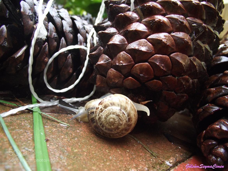 Photograph snail  by Şeyma Çimen on 500px