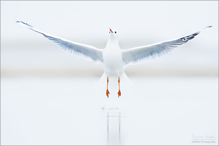 Photograph - Fly away - by Kevin Winterhoff on 500px