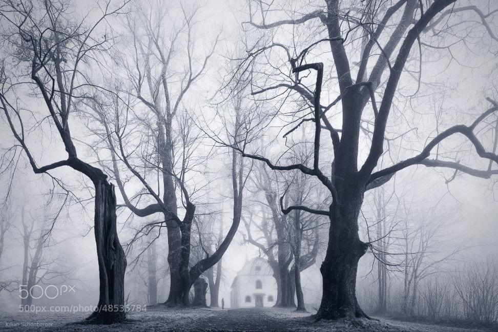 Photograph Scary Avenue by Kilian Schönberger on 500px