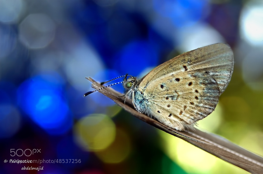 Photograph butterfly by abdelmajid  on 500px