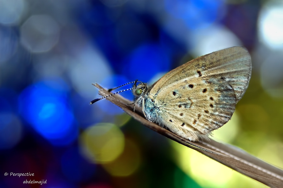 Photograph butterfly by A.A abdelmajid on 500px