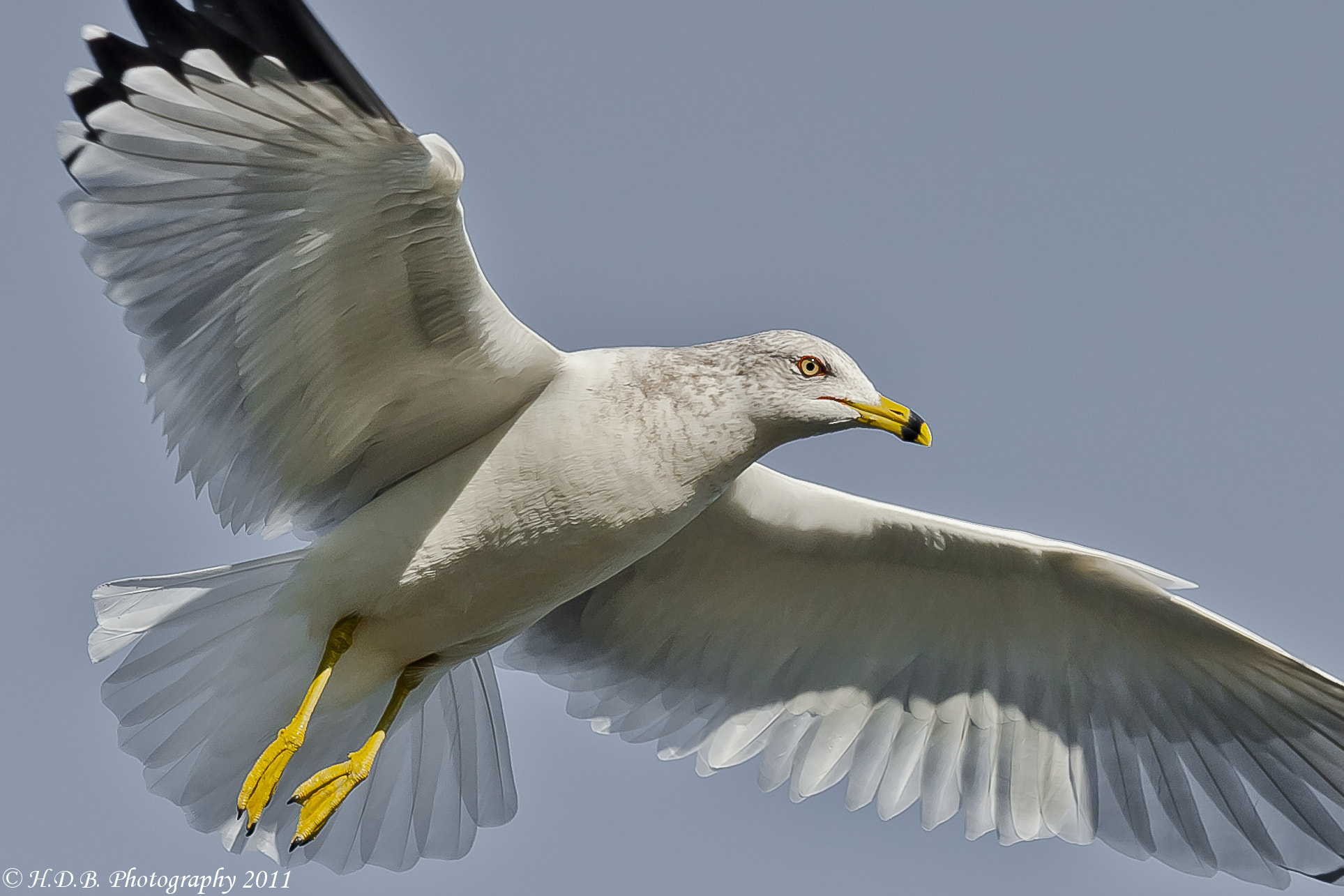 Photograph Glide by Harold Begun on 500px