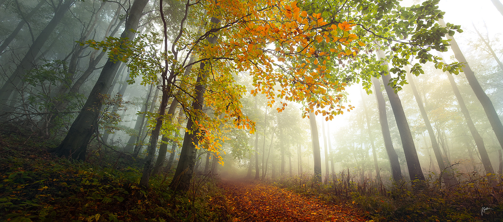 Photograph Anxious poetry of autumn by Janek Sedlar on 500px