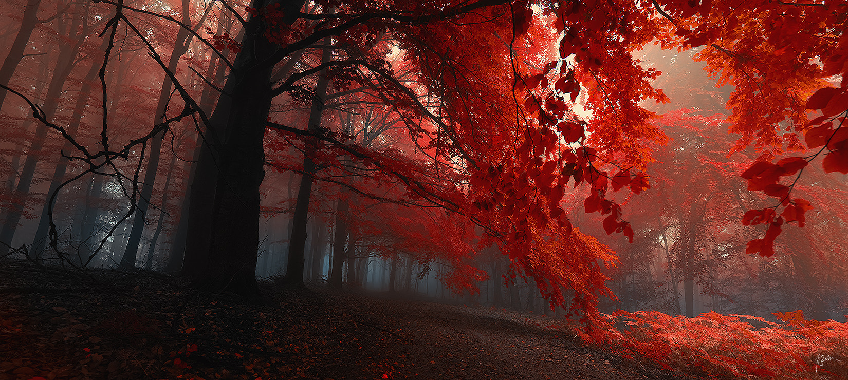 Photograph Sacred shivers by Janek Sedlar on 500px