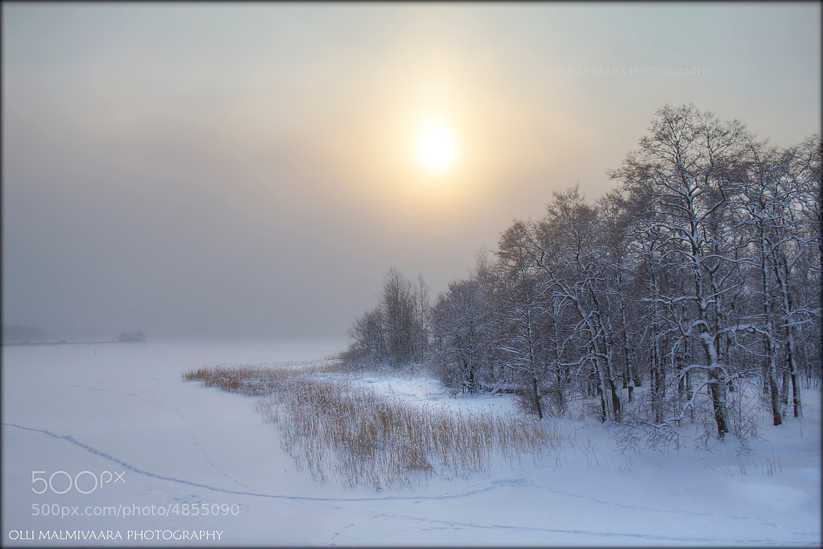 Photograph Cold Fog by Olli Malmivaara on 500px