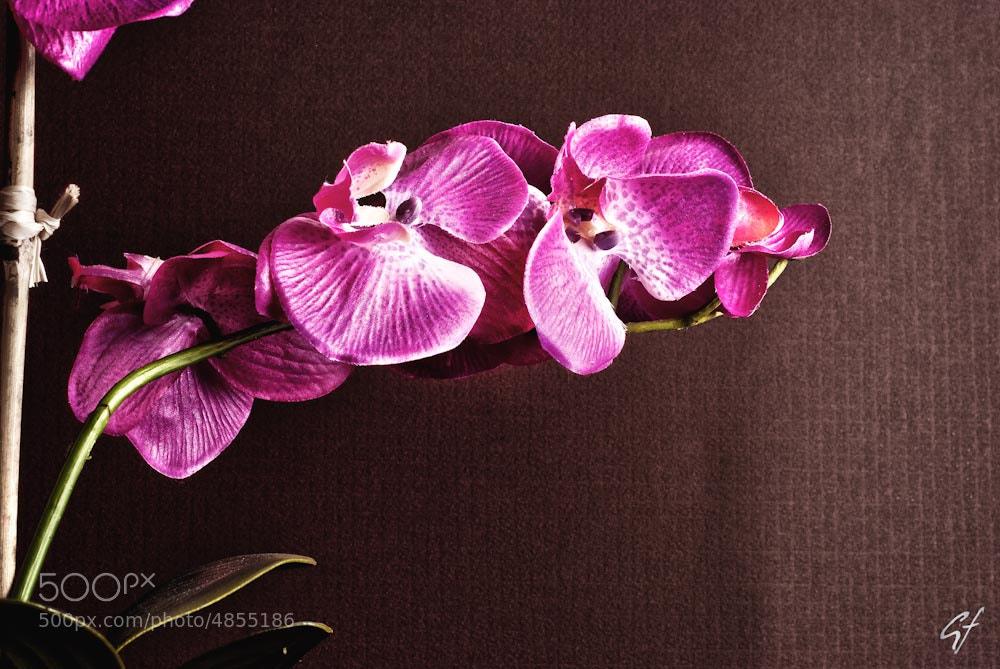 Photograph Orquídeas by Jair Garciaferro Lajud on 500px