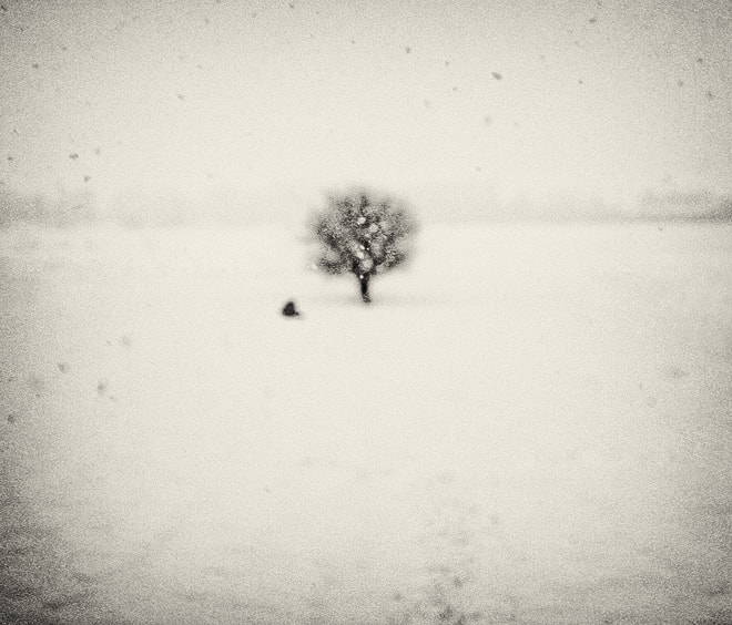Photograph Haiku Under The Snowflakes, With Passing Bird And A Tree by Andrei  Baciu on 500px