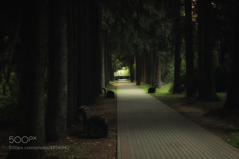 Photograph Dark Park by Roman Zaykovsky on 500px