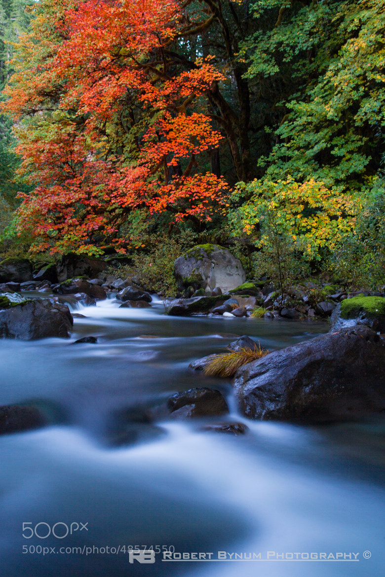 Photograph Fall Flow by Robert Bynum on 500px