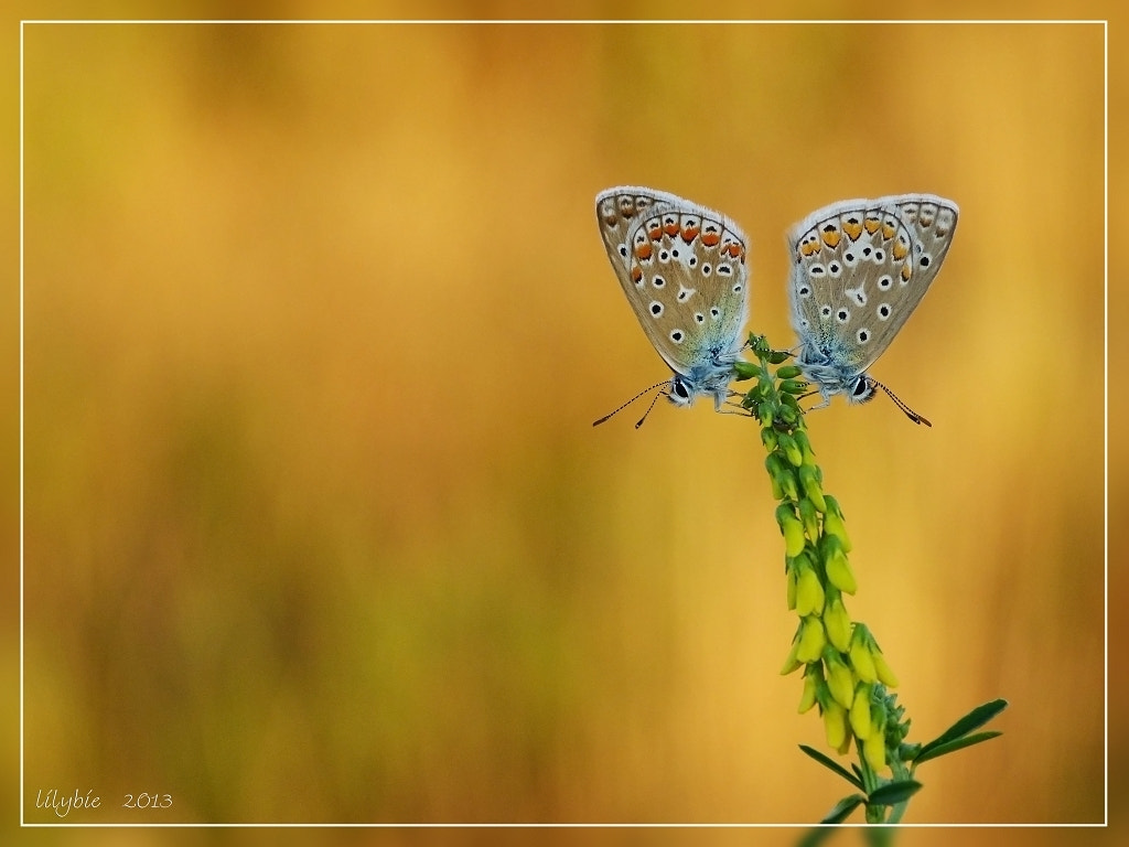 Photograph two blue on fire by liliane Buntinx on 500px