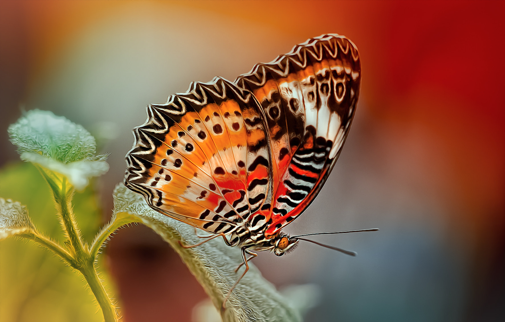 Photograph butterfly by Detlef Knapp on 500px