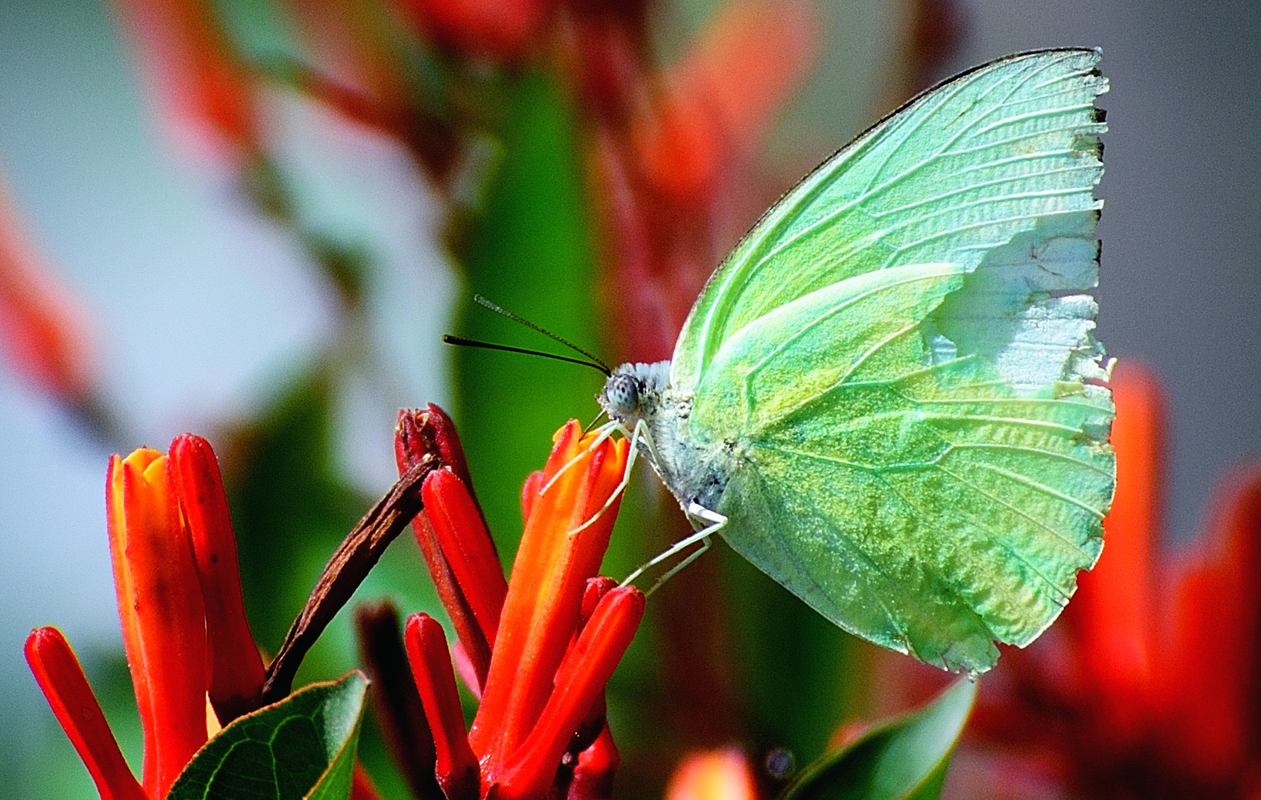 Photograph Nectar by Yogendra Singh on 500px