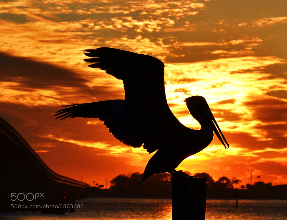 Photograph A Phoenix by Michael Fitzsimmons on 500px