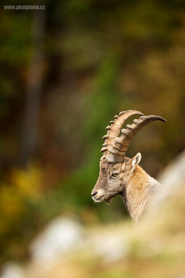 Photograph Ibex by Peter Krejzl on 500px