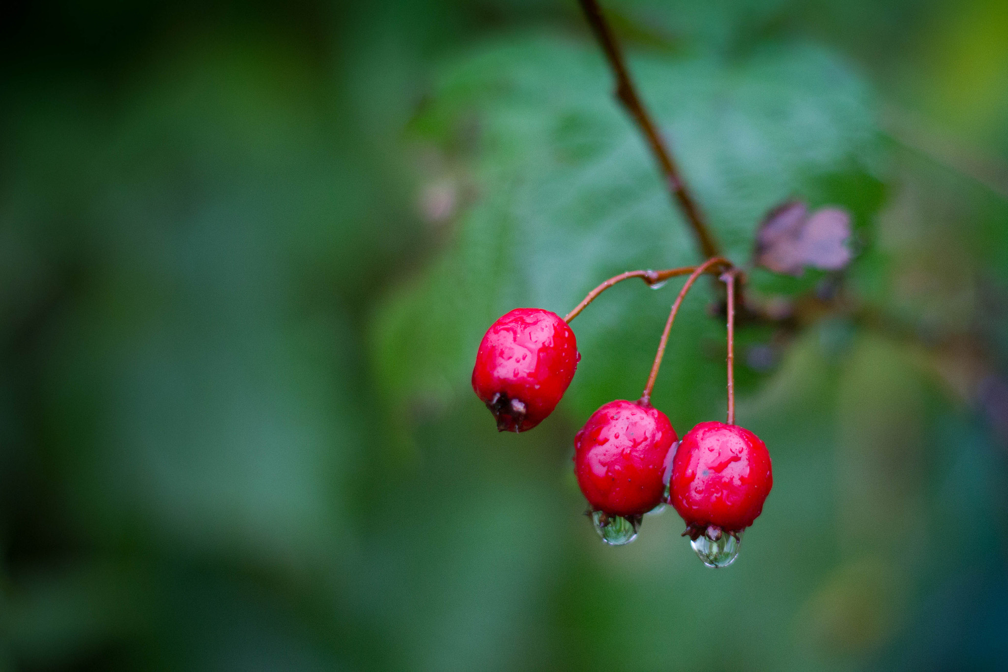 Photograph Berries by Heike Kitzig on 500px