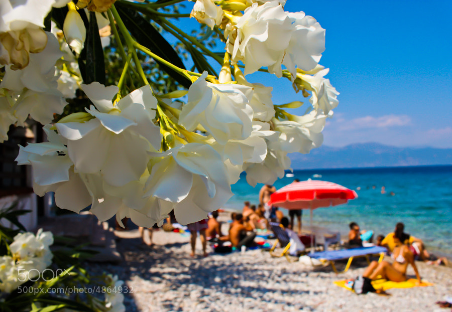 flower at beach