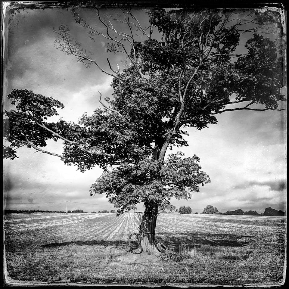 Photograph Tree, Shillingford Hill by Andrew Barrow ARPS on 500px