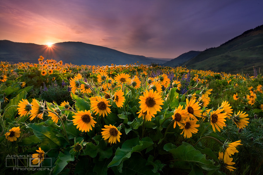 Photograph Bursting With Life by Adrian Klein on 500px