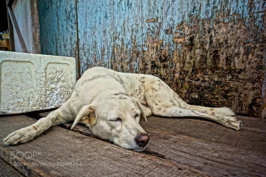 Photograph Fishermans Dog by Sean Cheng on 500px