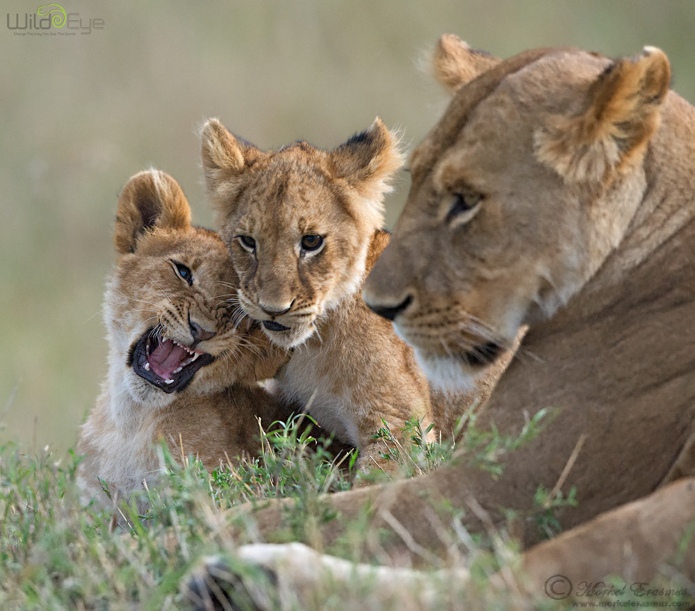 Photograph Family of Cats by Morkel Erasmus on 500px