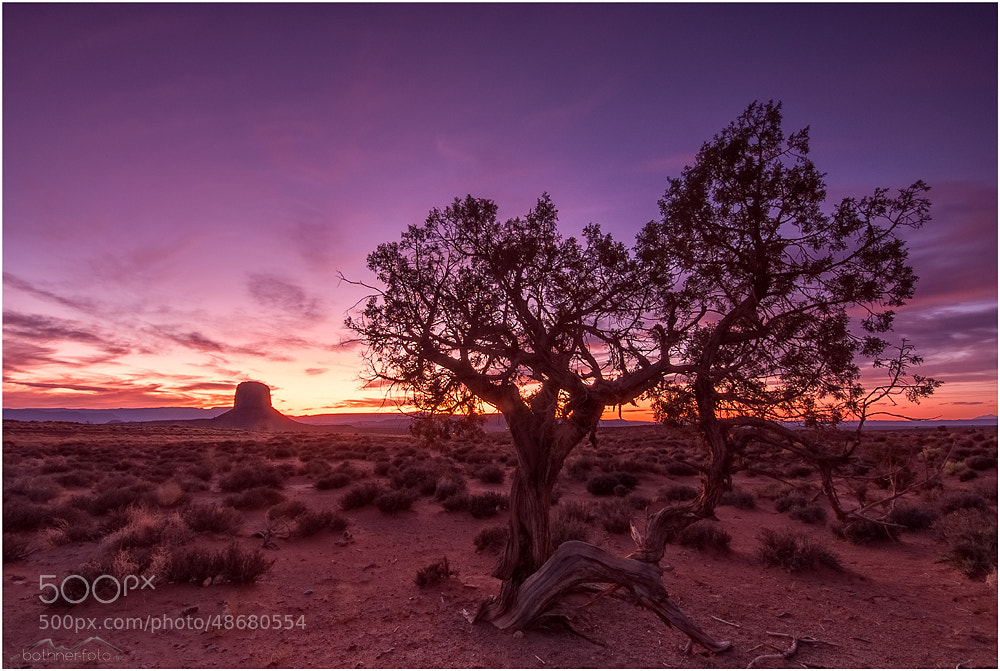 Photograph Tree by Christian Bothner on 500px
