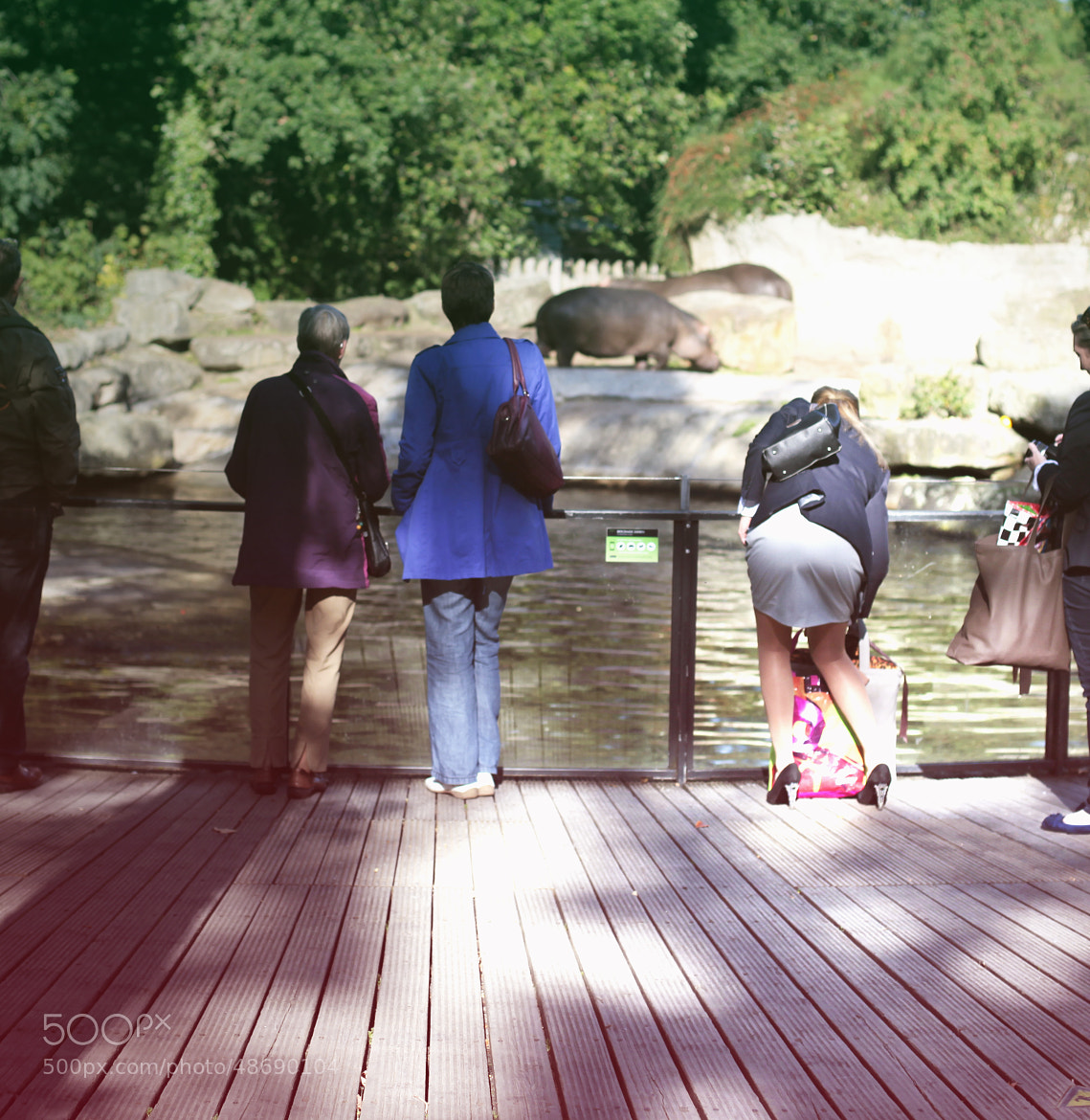 Photograph Watching Hippo's by rnkvnm on 500px