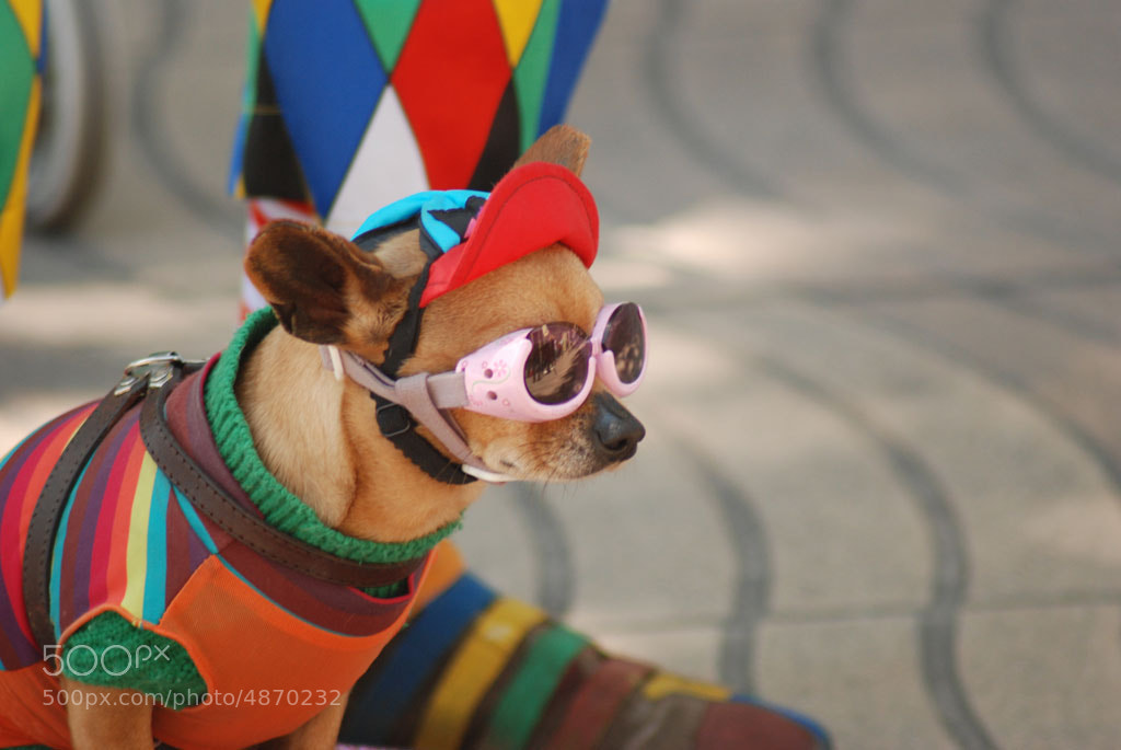 Photograph superdog by david alandí on 500px