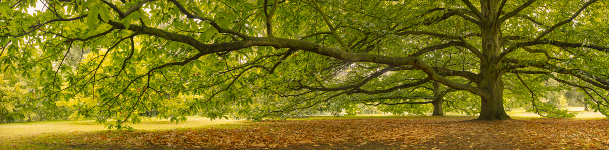 Photograph Branching out by Michael Gibbs on 500px