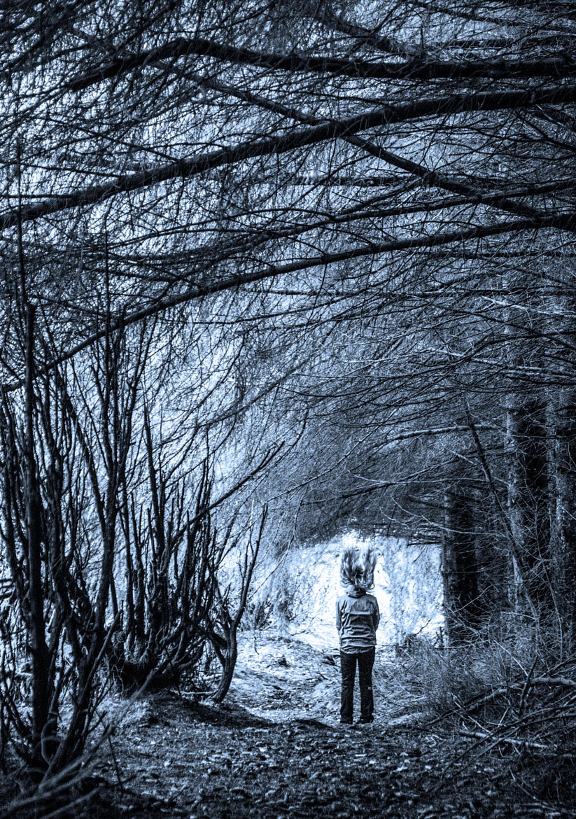 Photograph Into the forest by audun nygaard on 500px