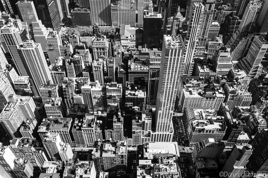 Photograph Concrete Jungle by David Juan on 500px