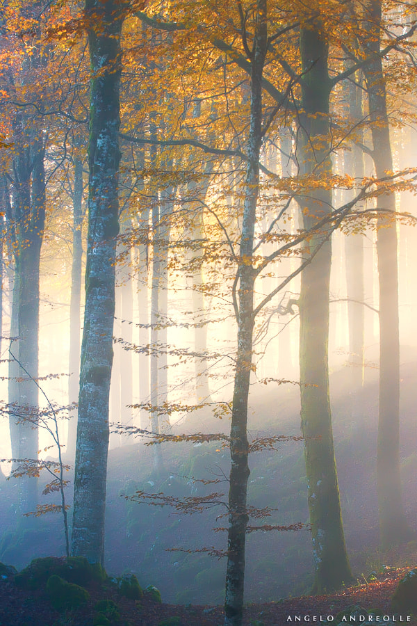 Photograph Cansiglio autumn by Angelo Andreolle on 500px
