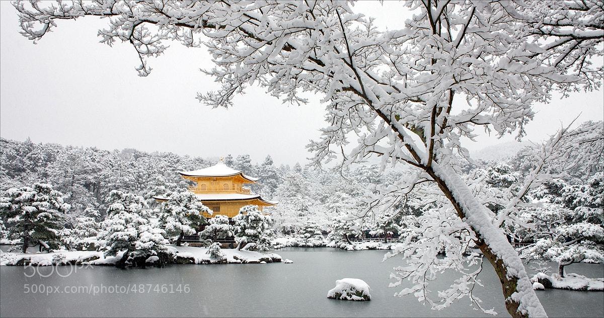 Photograph A Golden Winter by Tim  Czajkowski on 500px