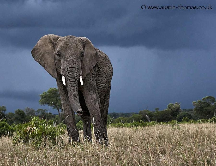 Welcome to the Masai Mara...
