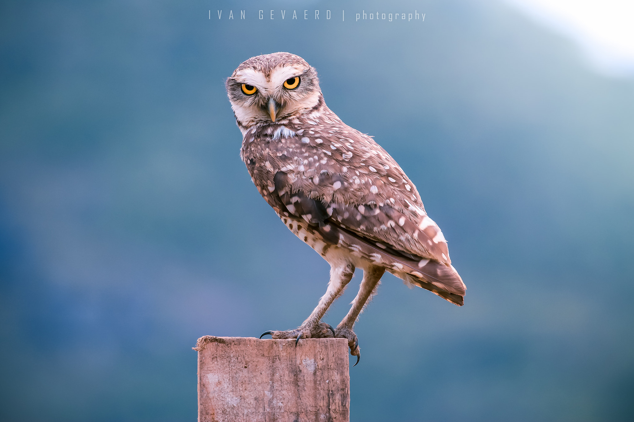 Photograph Eyes on you by Ivan Gevaerd on 500px