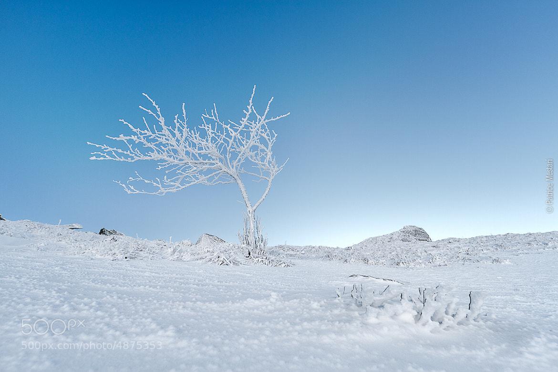 Photograph Auvergne - Un arbre bien classe by Patrice MESTARI on 500px