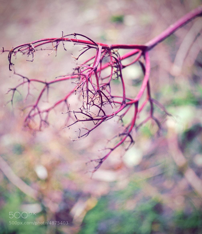 Photograph Autumn scar by Denis Smajić on 500px