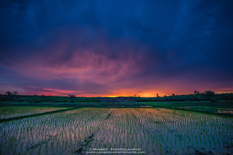 Photograph Rice plant! by Mardy Suong Photography on 500px
